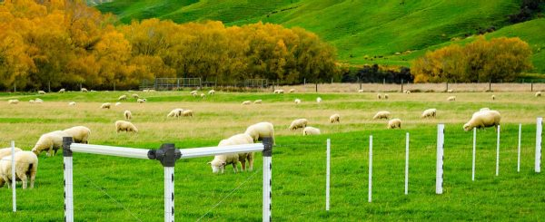 PVC-Post-and-Rail Sheep Fence
